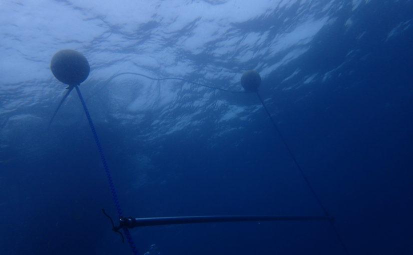 >゜))))彡<゜)))彡 海洋情報 C:。ミくコ:彡
