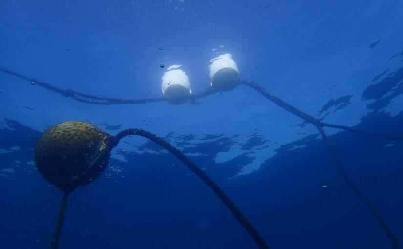 2021年2月19日 海洋状況 調査潜水